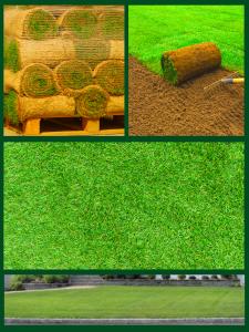 Grass Seed Sod Basics Landscpaing Co Inc